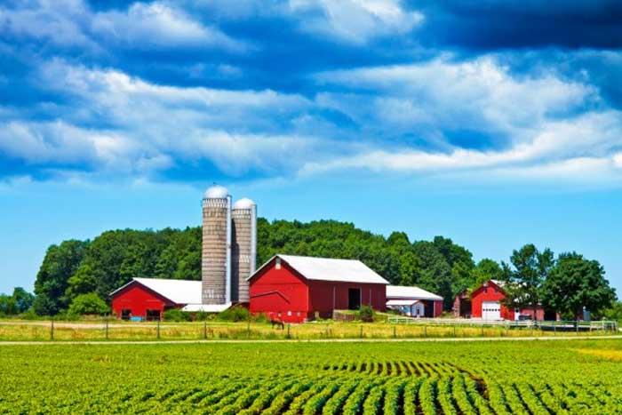 donald trump farm